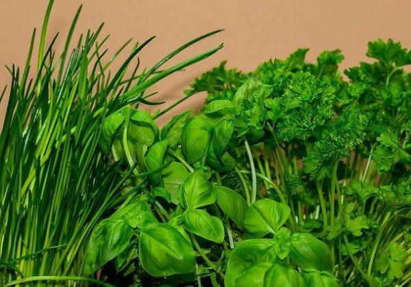 מזונות ירוקים